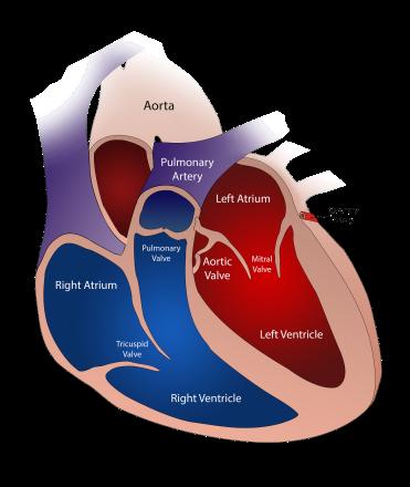 heart-2222964_1920